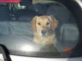 'Hond in hete auto? Tik ruit in'